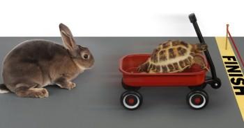 Curto e longo prazo - tartaruga vencendo coelho